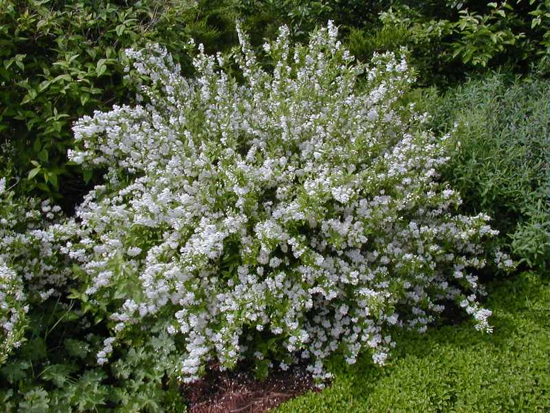 Southern Gardening Spring Shrubs